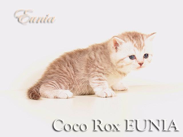 Coco Rox EUNIA